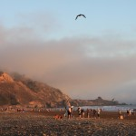 Golden light on a warm Autumn day at Stinson Beach