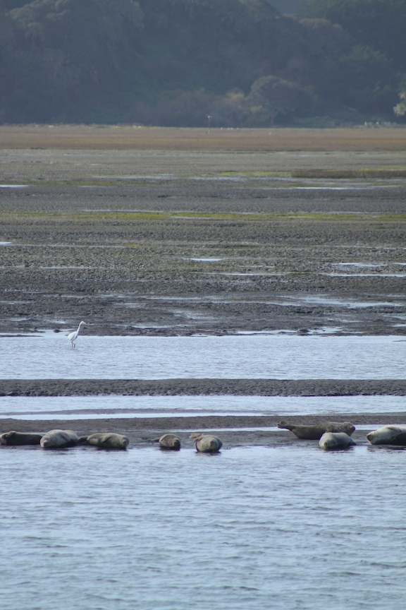 Wildlife in Bolinas Lagoon
